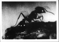 The Smelling of Burning Ants<br>Jay Rosenblatt 1994